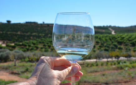 Vakantie in Castellón wijnproeven Bodega Mas de Rander