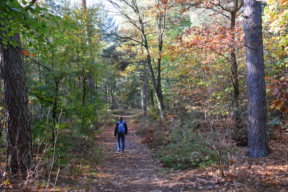 Wandelen in Soest bos bij Soesterduinen