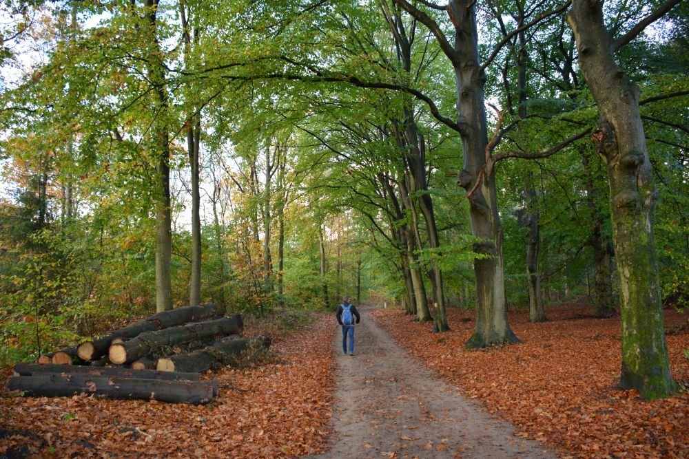 Wandelen in Soest bossen bij Soest