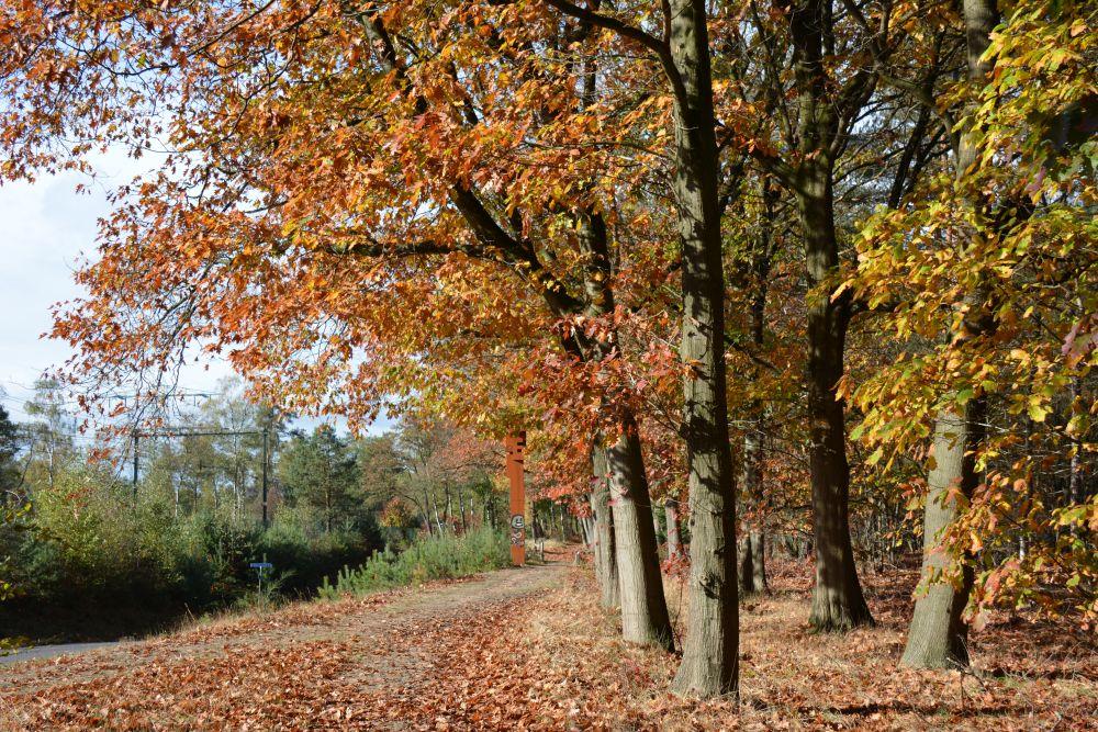 Wandelen in Soest herfstkleuren bij de spoorlijn