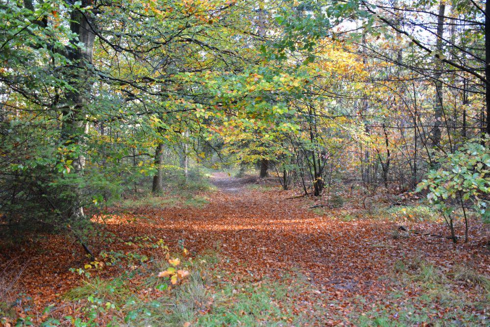 Wandelen in Soest in de herfst