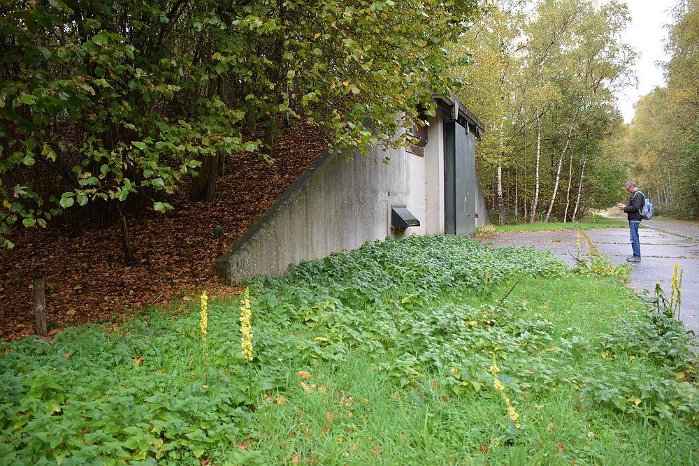 Wandelen in Soest oude munitiebunkers in bos