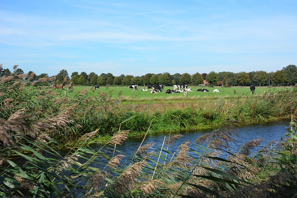 Wandelen in Twente Trage tocht Hilvarenbeek koeien in de wei