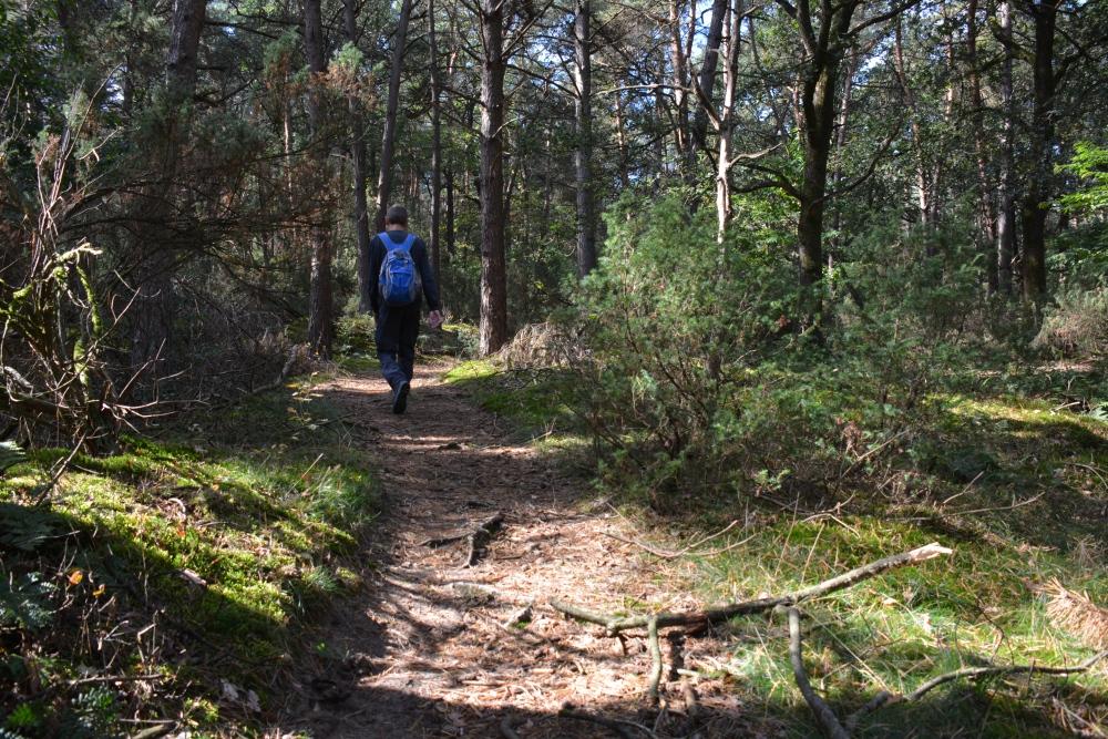 Wandelen in de bossen tijdens deTrage tocht Hilvarenbeek
