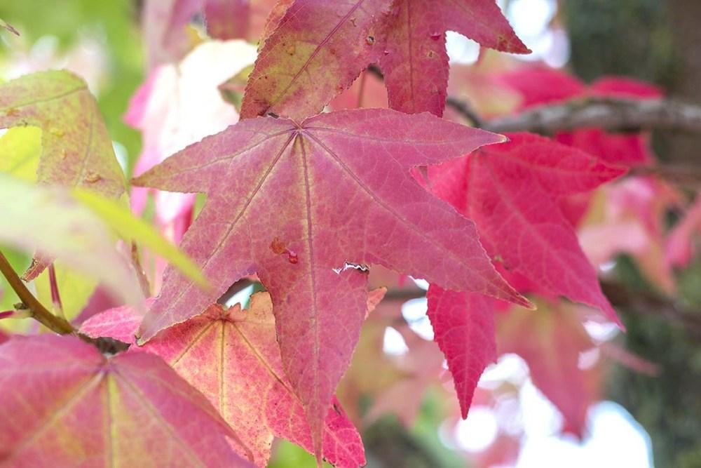 mooiste herfstwandelingen Amelisweerd en Rhijnauwen