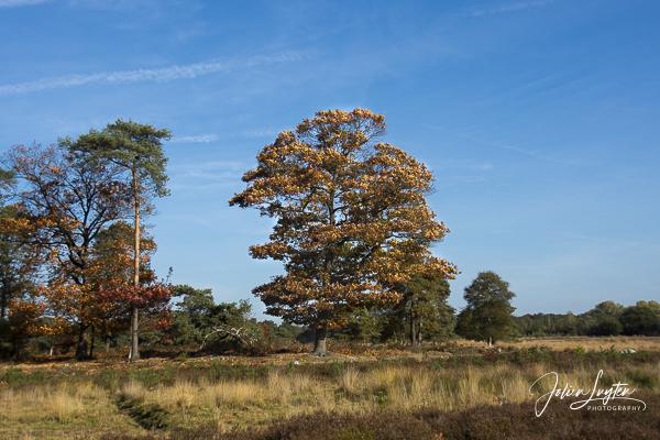 mooiste herfstwandelingen Strijbeekse Heide