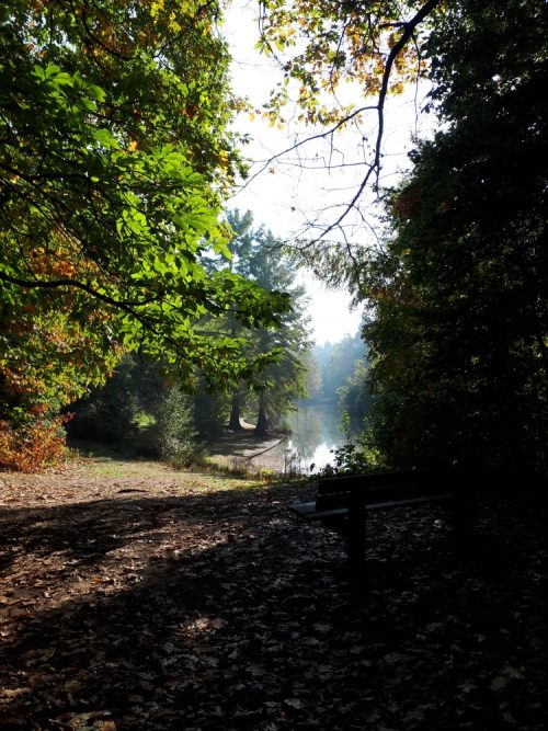 mooiste herfstwandelingen wandelbos Tilburg