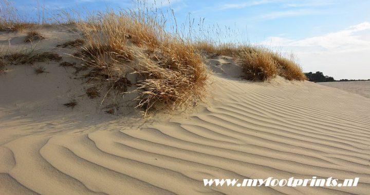 stuifzand in de Loonse en Drunense duinen