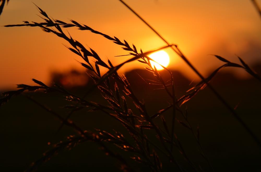 zonsopkomst B&B ZusenZomer Oostwoud