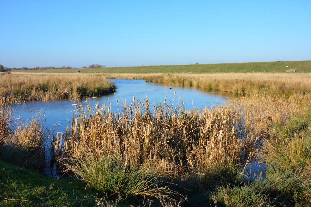 Zuiderwaterlinie wandelpad Steenbergse Vliet Saspoldertje