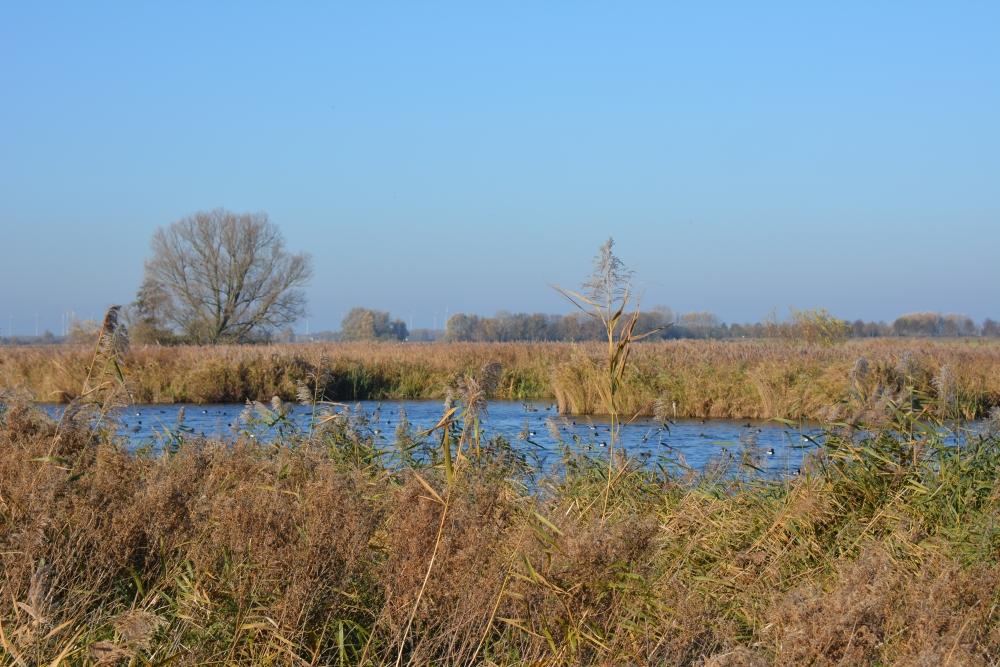 Zuiderwaterlinie wandelpad watervogels in het Steenbergsche Vliet