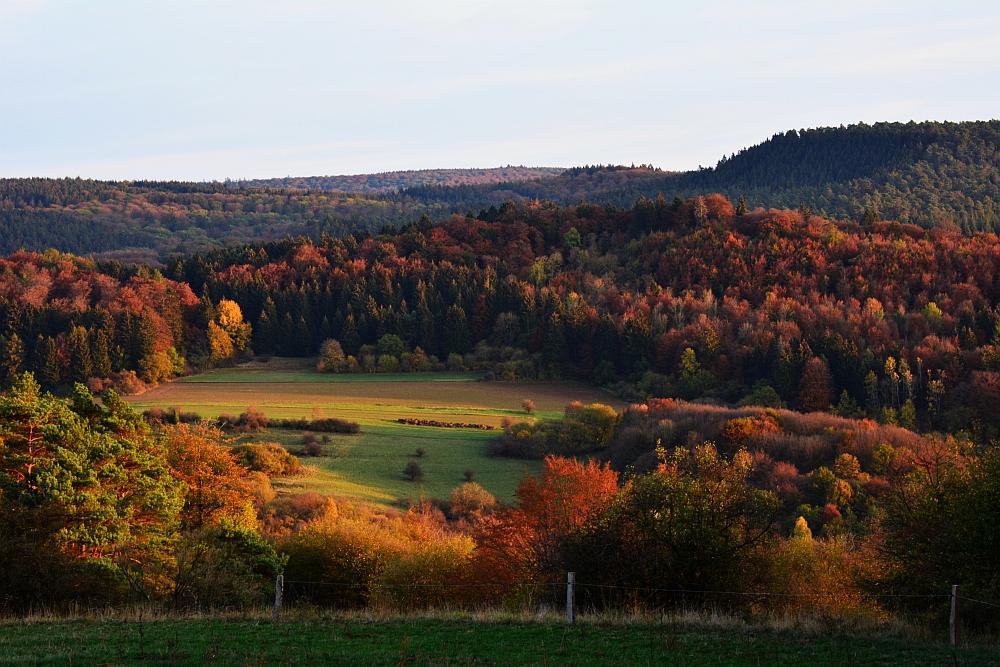 etappe van de Eifelsteig volop herfst in de Eifel