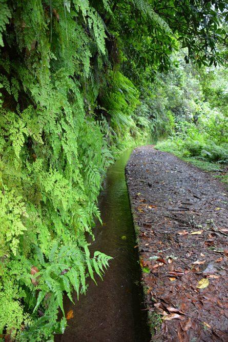 wandelen op Madeira varens langs de Levada do rei
