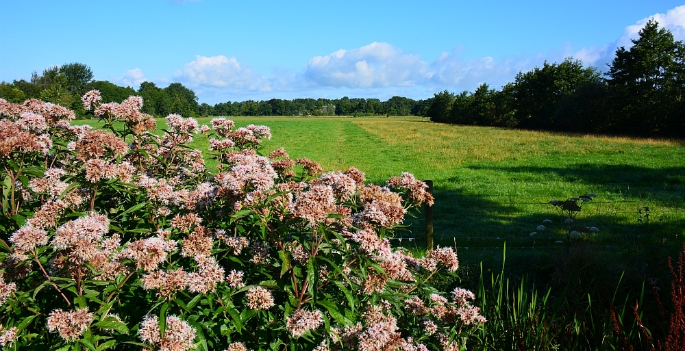 Wandelen in Friesland pagina van wandelblogger Myfootprints