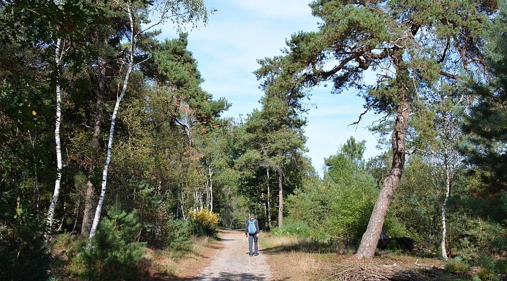 Wandelen in Overijssel pagina van wandelblogger Myfootprints