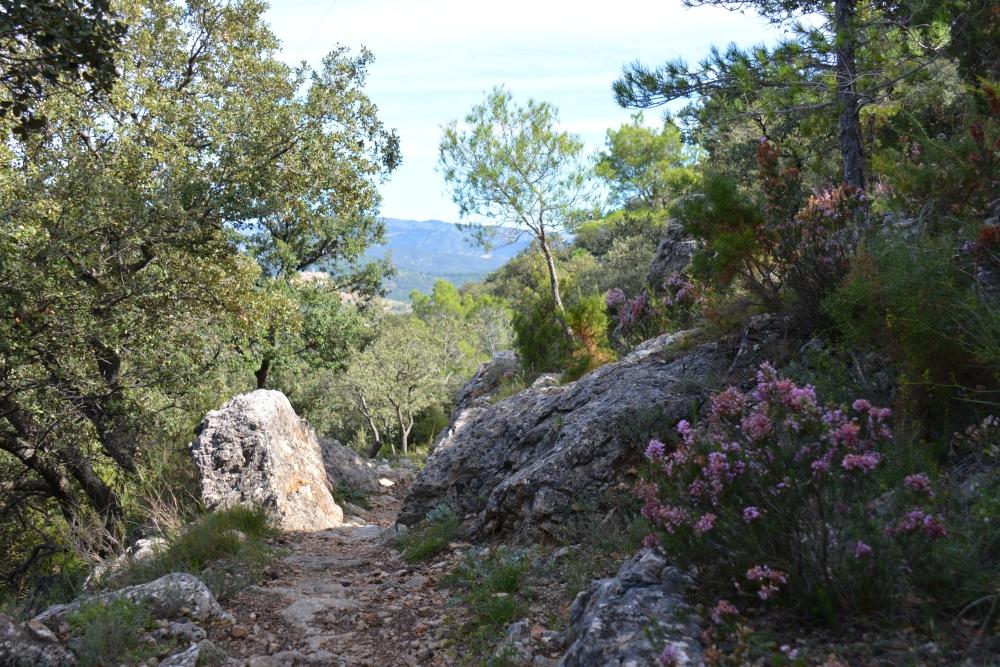 bergwandeling Parque Natural Tinença de Benifassà heide langs pad