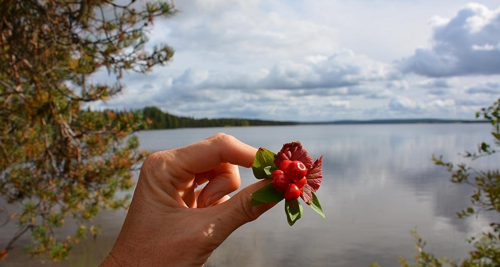 Fins Lapland, land van 1000 meren Finland pagina