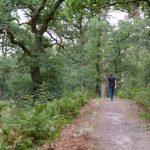 Wandelen bij Wolfhez bos bij de Wodanseiken