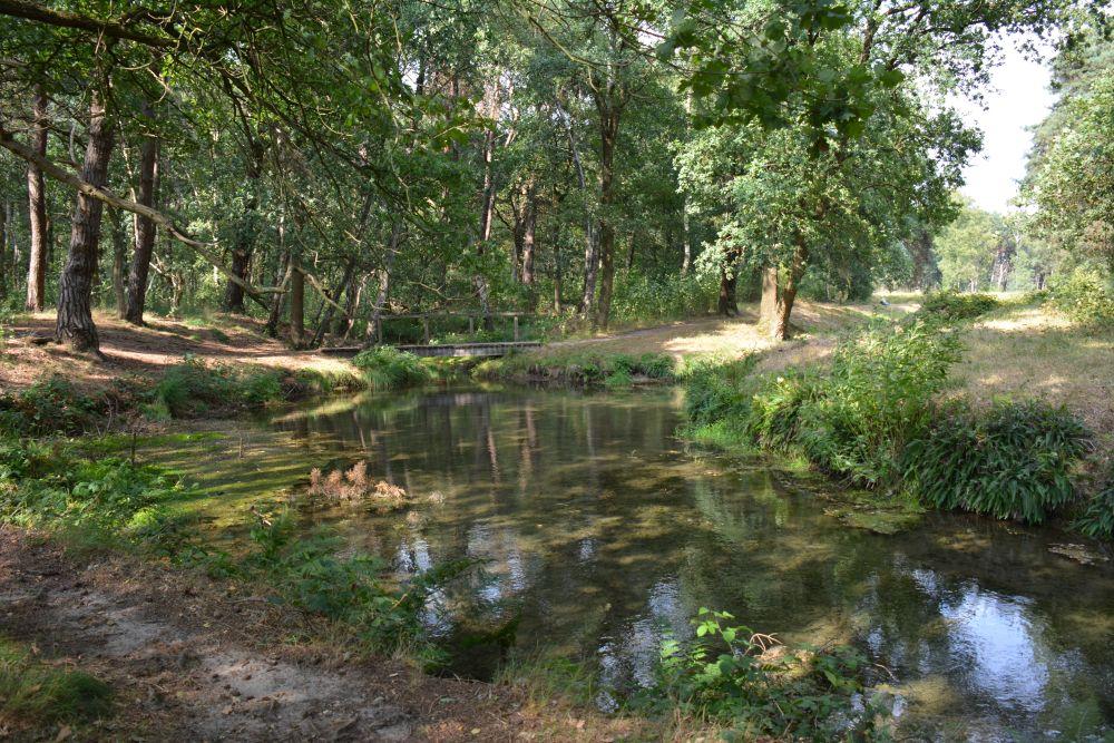 Wandelen bij Wolfheze; de Wolfhezer heide en de Wodanseiken. riviertje