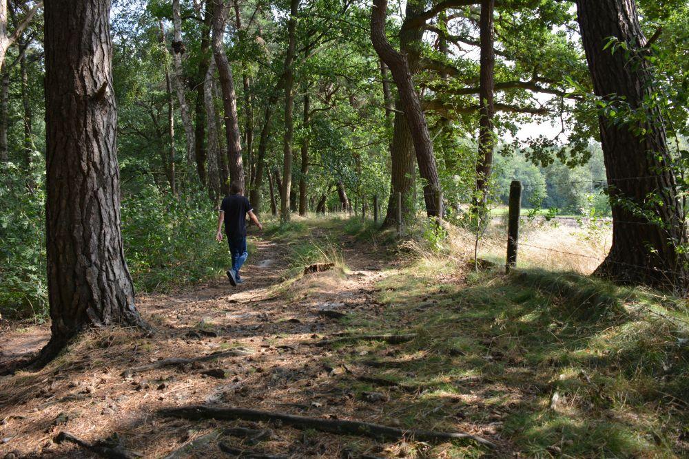 Wandelen bij Wolfheze route ;langs de Wodanseiken
