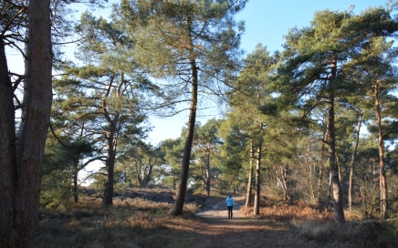 op de rand van heide en bos Trage Tocht Wellerlooi