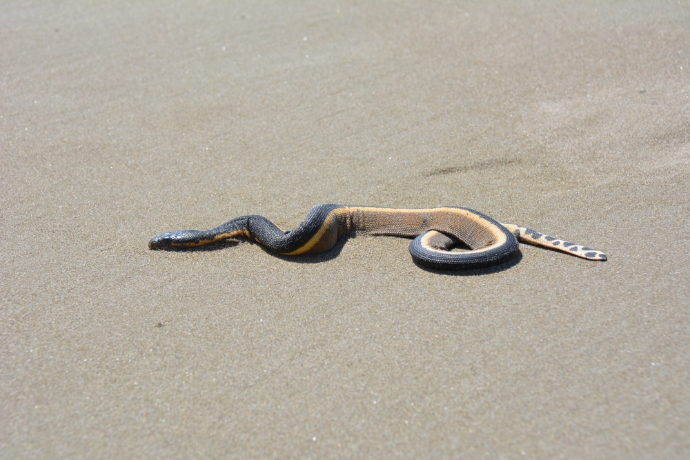 slang op Playa del Coco Nicaragua