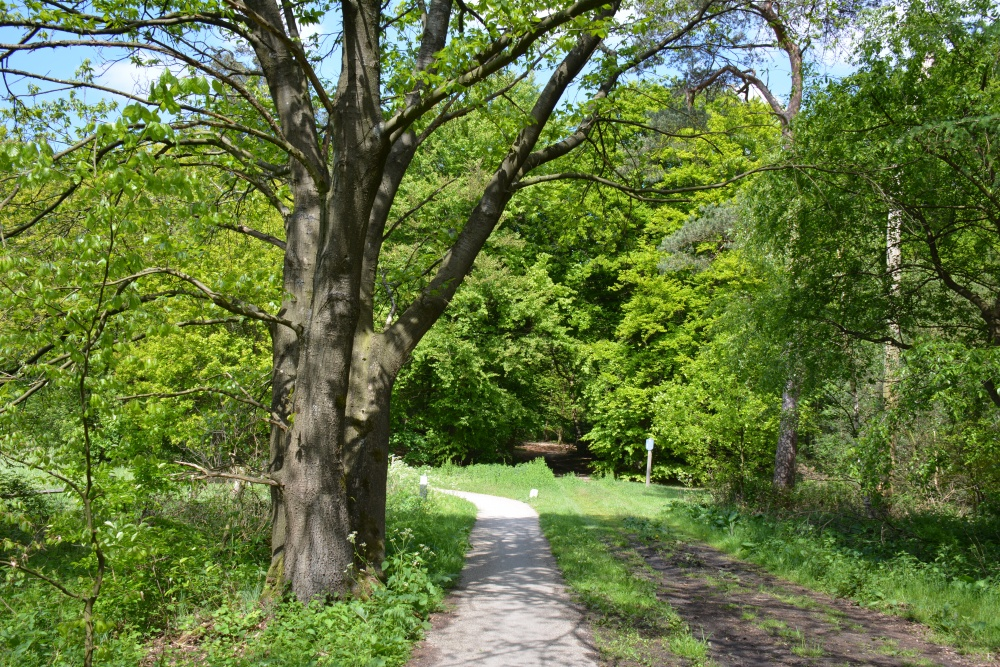 Fietsen Utrechtse heuvelrug bos en weilanden