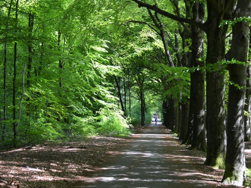 Fietsen Utrechtse heuvelrug door de bossen