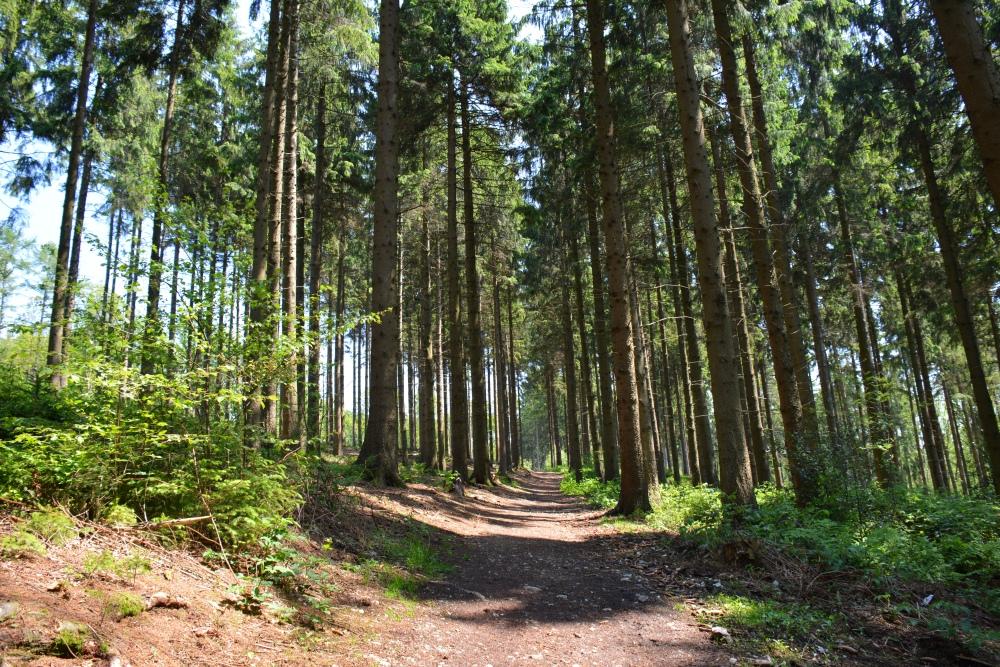 Het Vijlenerbos in Limburg