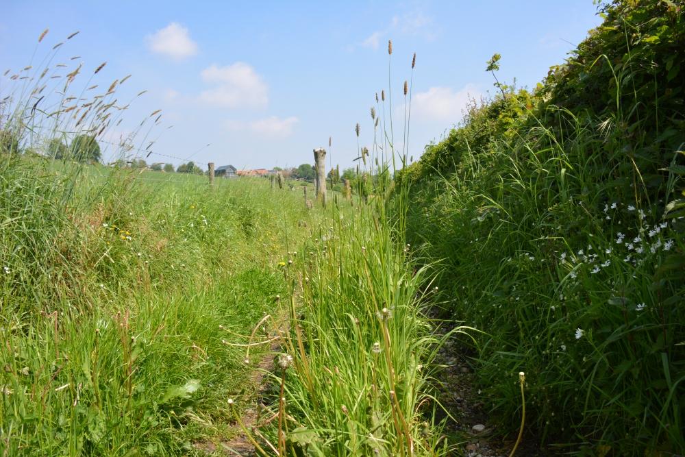 Wandelroute Epen door het gras