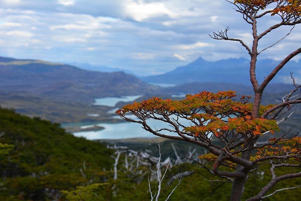 herfstkleuren 2019 Torres del Paine