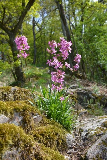 wandelen Eifel bloemen