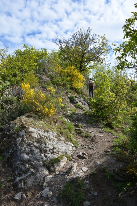 wandelen Eifel in de route zitten diverse pittige klimmetjes