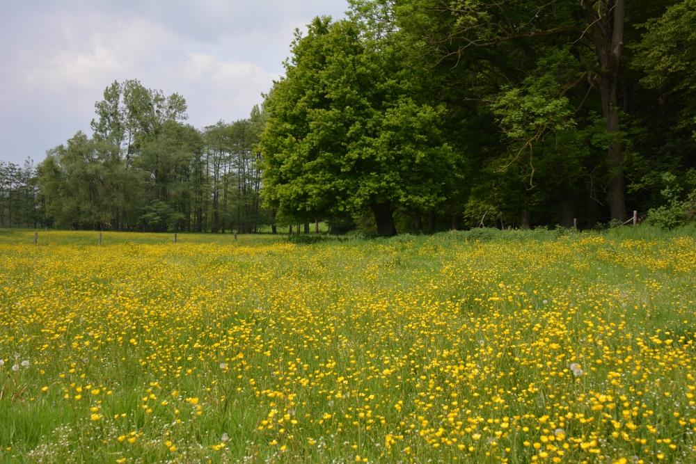 wandelroute Epen veld gele bloemen