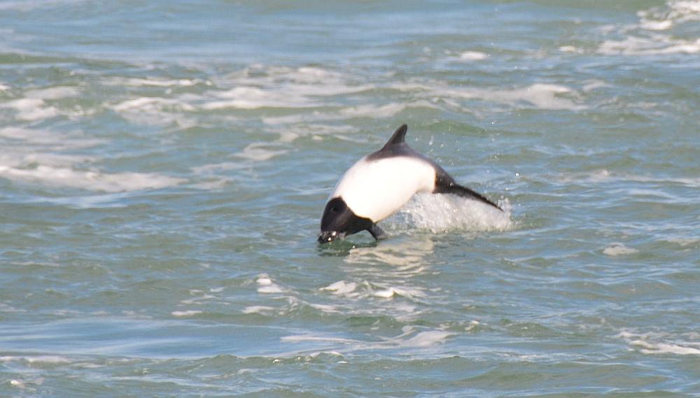 dolfijn veerboot Vuurland
