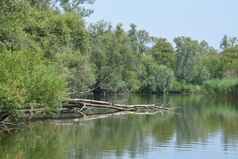 met een fluisterboot door de Biesbosch