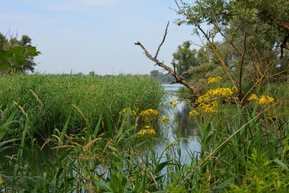 wandelen in de Biesbosch langs het water