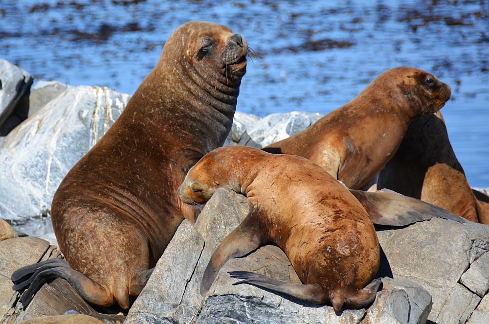 zeeleeuwen Ushuaia