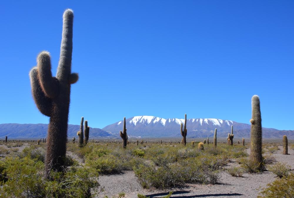 recta del TinTin bij Salta Argentinië
