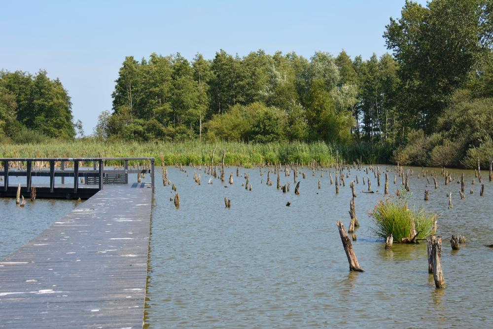 Het verdronken bos bij Schalkwijk