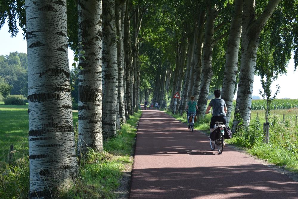 bomenlaan tijdens Utrechtse Fietsvierdaagse 2019