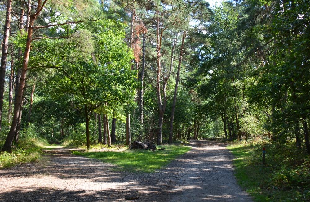 bos bij Brunssum