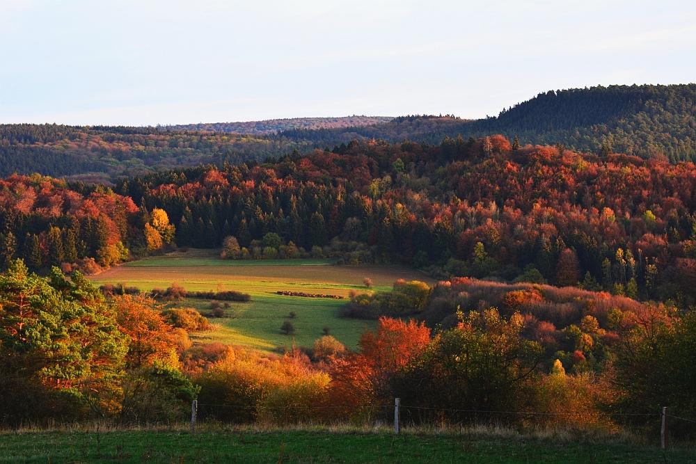 etappe van de Eifelsteig volop herfst in de Eifel a