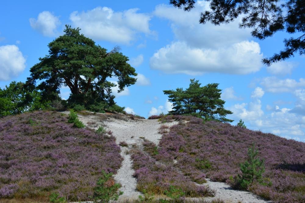 heuvel op de Brunssummerheide
