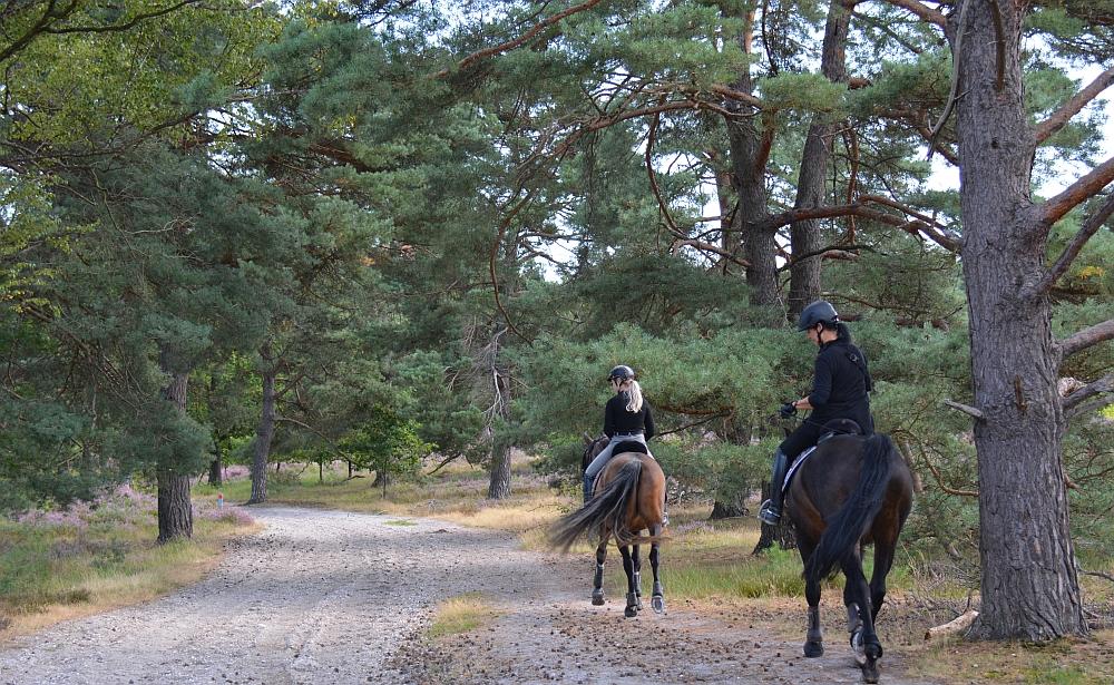 paardrijden op de de Brunssummerheide