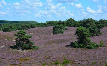 rollende heidevelden op de Brunssummerheide