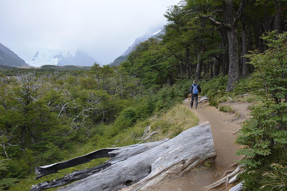 Sendero Laguna Torre bij El Chalten langs het bos