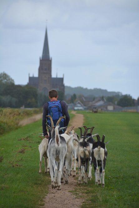 Wandelen met geiten Waterbergings- en inundatiegebied Blokhoven