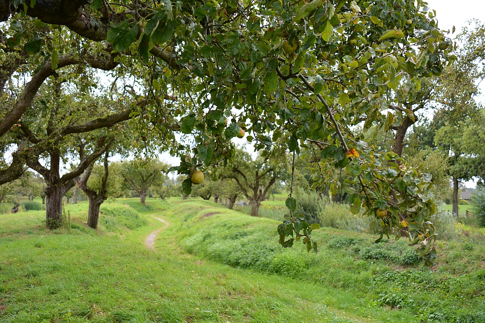 appelboomgaard bij Werk aan de Groeneweg Klompenpad Lint- en Liniepad