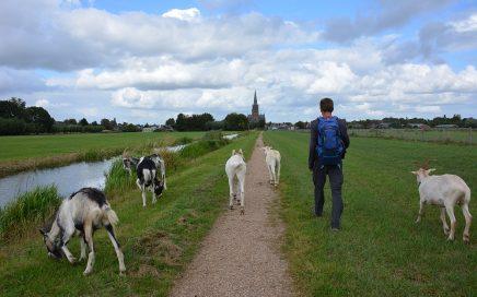 klompenpad Lint en Liniepad tussen de geiten